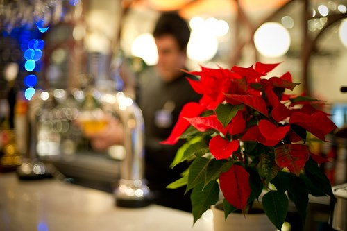Langdale Lounge and Poinsettia