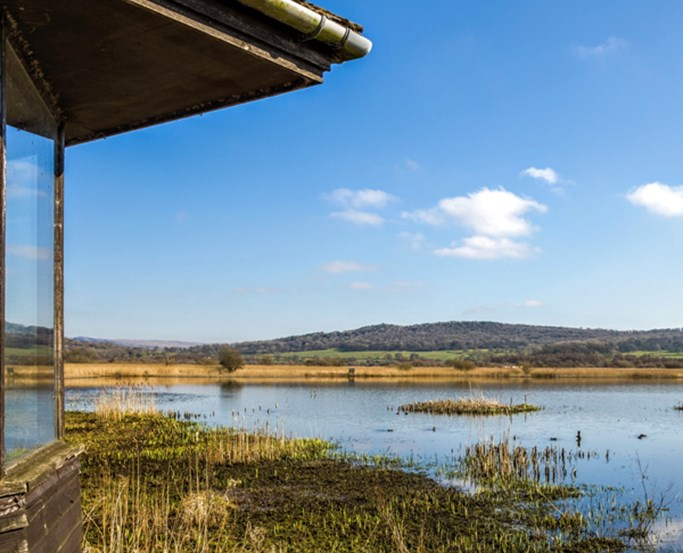Leighton Moss, Lancaster Attractions, Lancashire | English Lakes